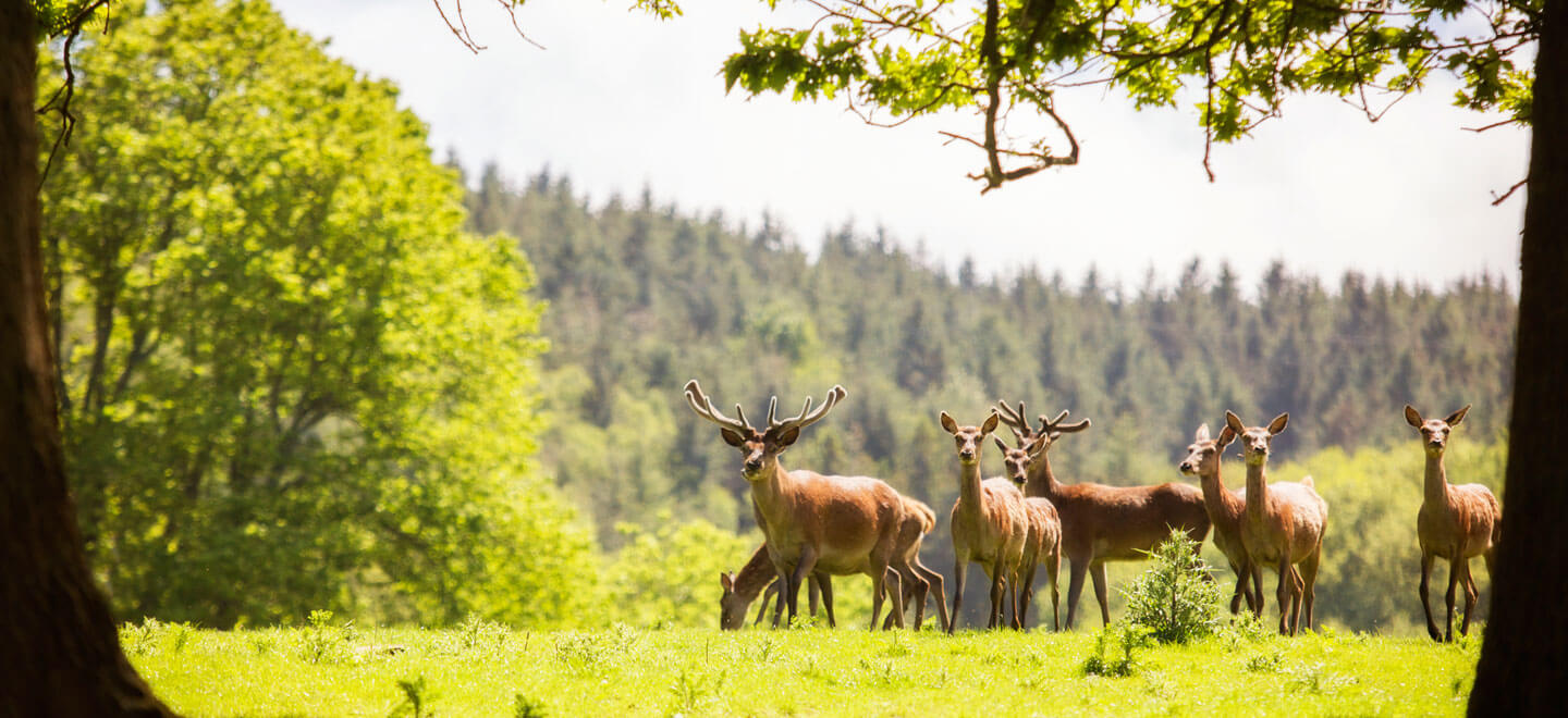 The-Deer-at-St-Audries-House-country-house-wedding-venue-in-Somerset-via-The-Gay-Wedding-Guide