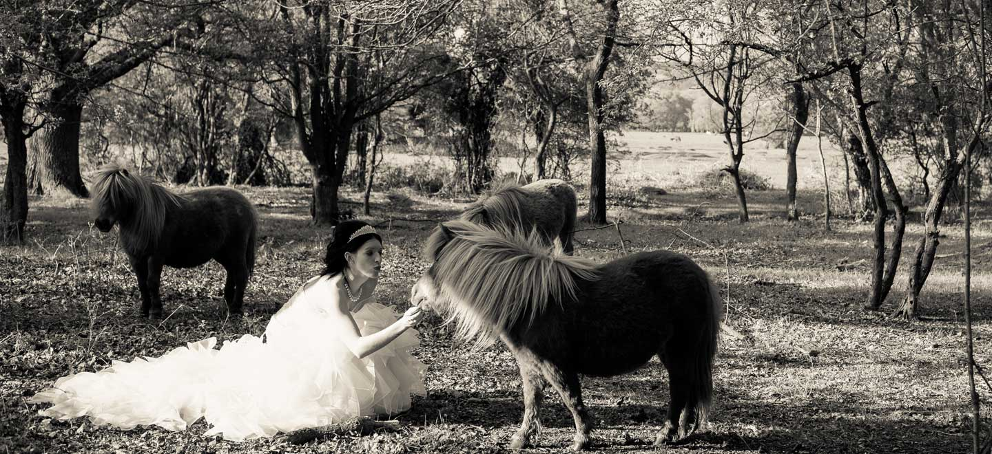 Shetland-Ponies-at-Balmer-Lawn-Gay-wedding-venue-Brockenhurst-via-the-Gay-Wedding-Guide